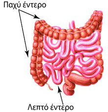 Schematic depiction of small bowel